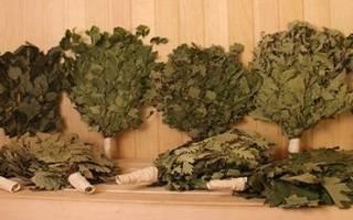 Когда заготавливать березовые веники для бани?