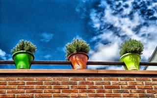 Какие лампы использовать для подсветки растений?