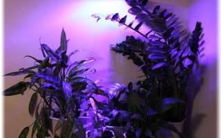 Какой лампой подсвечивать цветы?