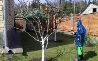 Как утеплить молодые саженцы плодовых деревьев?